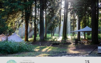 Libramont Regenerative Alliance : Messages from the Woods